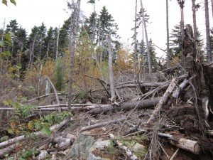 Lot clearing on Chebeaque Island
