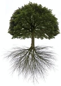 tree fert
